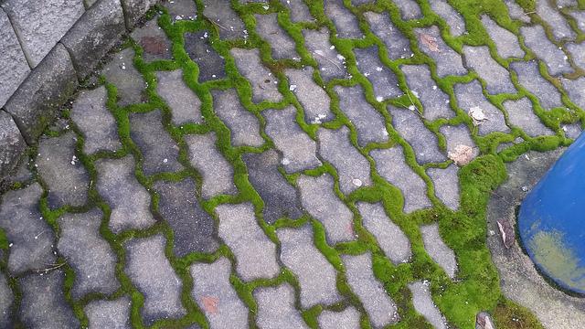 Moss vs. Brick.